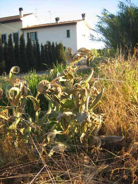 pesticidi. IL GLIFOSATE SOTTO CRESCENTE OSSERVAZIONE