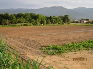 Qui si coltivano verdure da incenerimento?