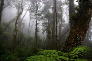 Foresta del Borneo [foto Nicola Messina]