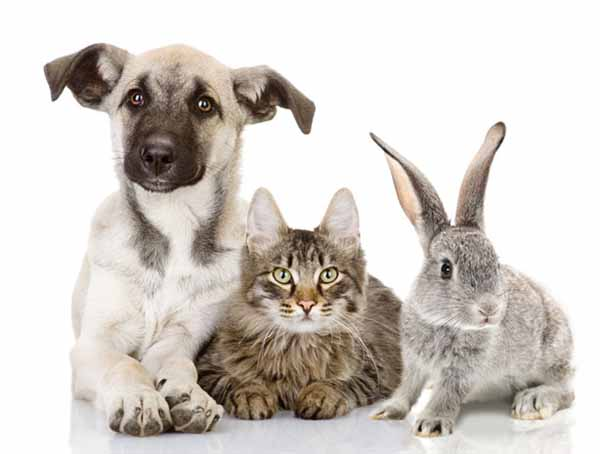 ANIMALI IN OSPEDALE: LINEE-GUIDA PER VISITE AI PAZIENTI