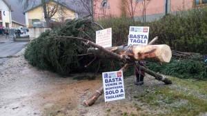Un albero come l'Italia, abbattuto