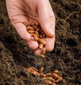 semina-in-piena-terra