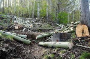 Disboscamento-