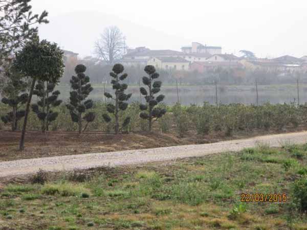 pesticidi. LA RISPOSTA ELUSIVA DI MANGONI