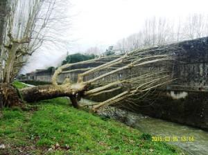 Un albero nella Brana