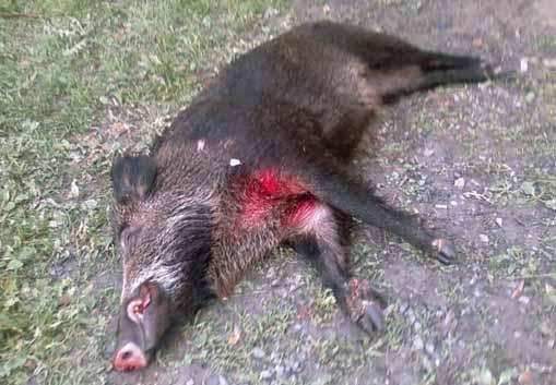 sterminiamo gli animali. GERI: «POLITICI IRRESPONSABILI»