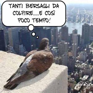 Dalla parte dei piccioni. 1