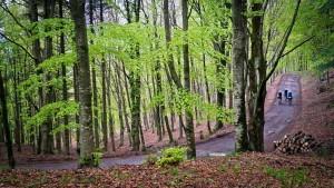 La riserva naturale dell'Acquerino