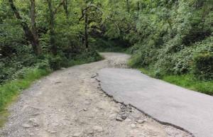 La strada forestale Baggio-Poggione