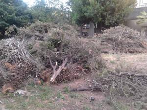 Alberi abbattuti ancora da rimuovere alle Fornaci dopo la tempesta di vento del 5 marzo 2015