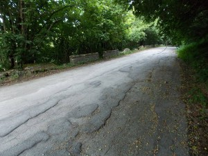 Alberi che invadono la Via Bolgnese