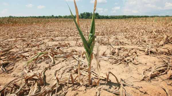 """siccità. AGRICOLTORI IN GINOCCHIO. CONFAGRICOLTURA: """"LA REGIONE INTERVENGA AL PIÙ PRESTO"""""""