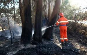 Protezione Civile su un incendio in un bosco