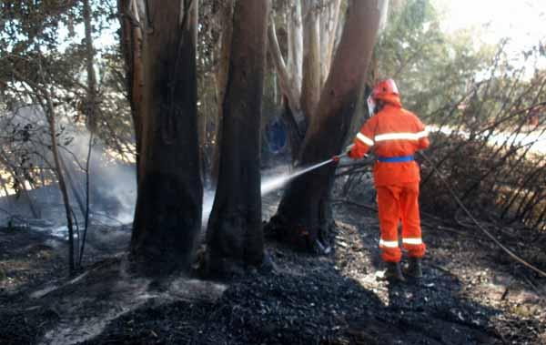 """incendi. DONZELLI (FDI): """"PREVENZIONE DA RIFONDARE, UN ERRORE CANCELLARE LA FORESTALE"""""""
