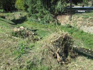 Resti di alberi lungo la Brana