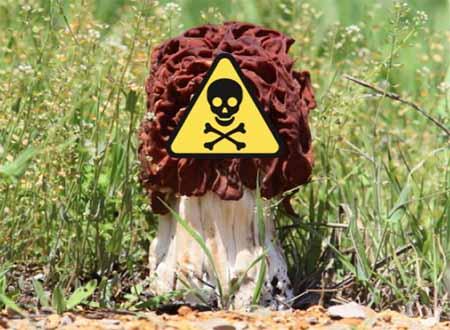 funghi. PER EVITARE L'INTOSSICAZIONE RIVOLGETEVI AGLI SPORTELLI MICOLOGICI