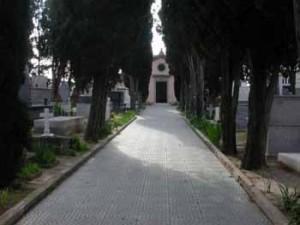 Tornano i cipressi al cimitero
