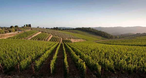 confagricoltura. RECORD EXPORT VINO TOSCANO 2015: +10,5 %