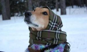 Un cane in inverno (Enpa)