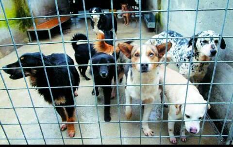 convegno. LE NORME PER LA TUTELA DEGLI ANIMALI E LA PREVENZIONE DEL RANDAGISMO