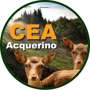 Cea Acquerino