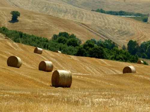 giovani agricoltori. IRPET: «MAGGIOR PIL E OLTRE 6MILA POSTI DI LAVORO»