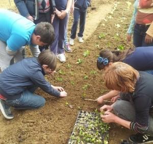 Saranno premiati i progetti dedicati all'agricoltura