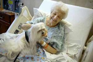 Pet-Therapy [foto web]