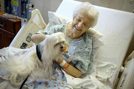pet-therapy. NICCOLAI (PD): «VALORIZZARE FIGURE PROFESSIONALI»