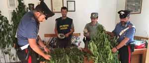 carabinieri. CANAPA INDIANA, ARRESTATI DUE ELFI