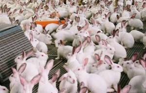 Conigli. Vivono così...