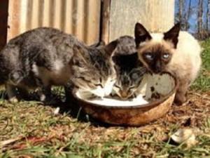 sono tre gatti ma... mangiano per venti!