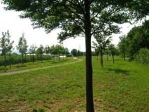 L'arboretum del Mollungo