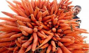 Così l'Italia diventa la Repubblica delle carote [beppegrillo.it]