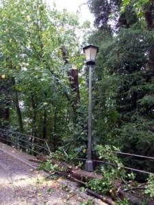Il ramo caduto sul viale Europa a Cutigliano