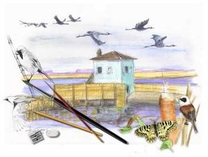 Il padule disegnato da Sacchetti