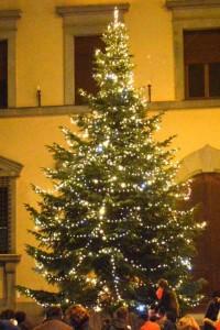L'albero in piazza Duomo