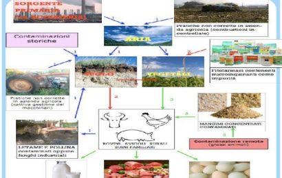 inquinamento-alimenti. NELLA PIANA TEORIA E PRATICA NON COINCIDONO. 2