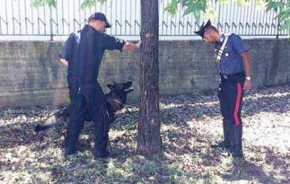 carabinieri. UN ARRESTO PER DETENZIONE DI STUPEFACENTI E UNA DENUNCIA PER RICETTAZIONE