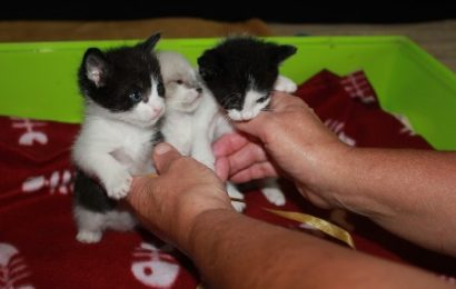 emergenza gatti. A PISTOIA IL PRIMO CORSO PER DIVENTARE BALIA