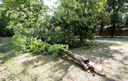 "alberi caduti a firenze. CONFAGRICOLTURA: ""BASTA BUONISMO E IMPROVVISATI ESPERTI"""
