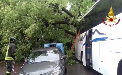 "albero caduto a firenze. ""STORIA DI UN DISASTRO ANNUNCIATO"""