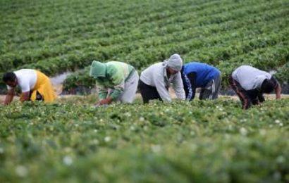 """BONUS 500 EURO PER I BRACCIANTI AGRICOLI, LA UILA-UIL TOSCANA: """"GIUSTIZIA È FATTA"""""""