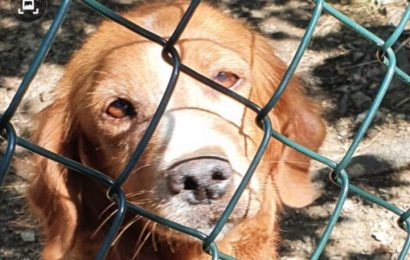 CANE IMPRIGIONATO IN UNA INFERRIATA, SALVATO DALLA POLIZIA PROVINCIALE