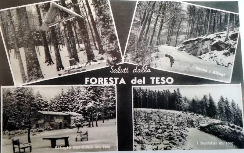 NESSUN TAGLIO IRREGOLARE NELLA FORESTA DEL TESO. REALIZZATA SOLO UNA 'PISTA' NON PREVISTA
