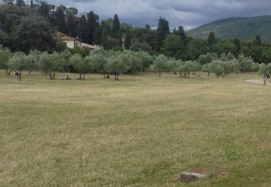 PARCO DI GALCETI, NUOVA RECINZIONE PER PROTEGGERE LA RIFORESTAZIONE